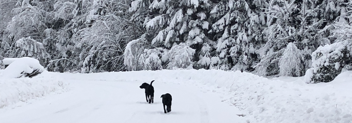 Snowy Dogs on Trail 2019